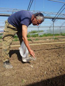 La semina dei borlotti