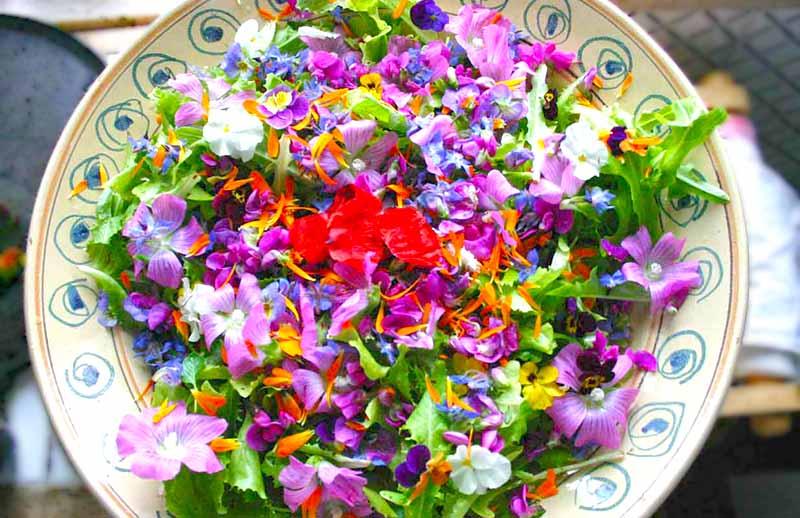 fioridamangiare