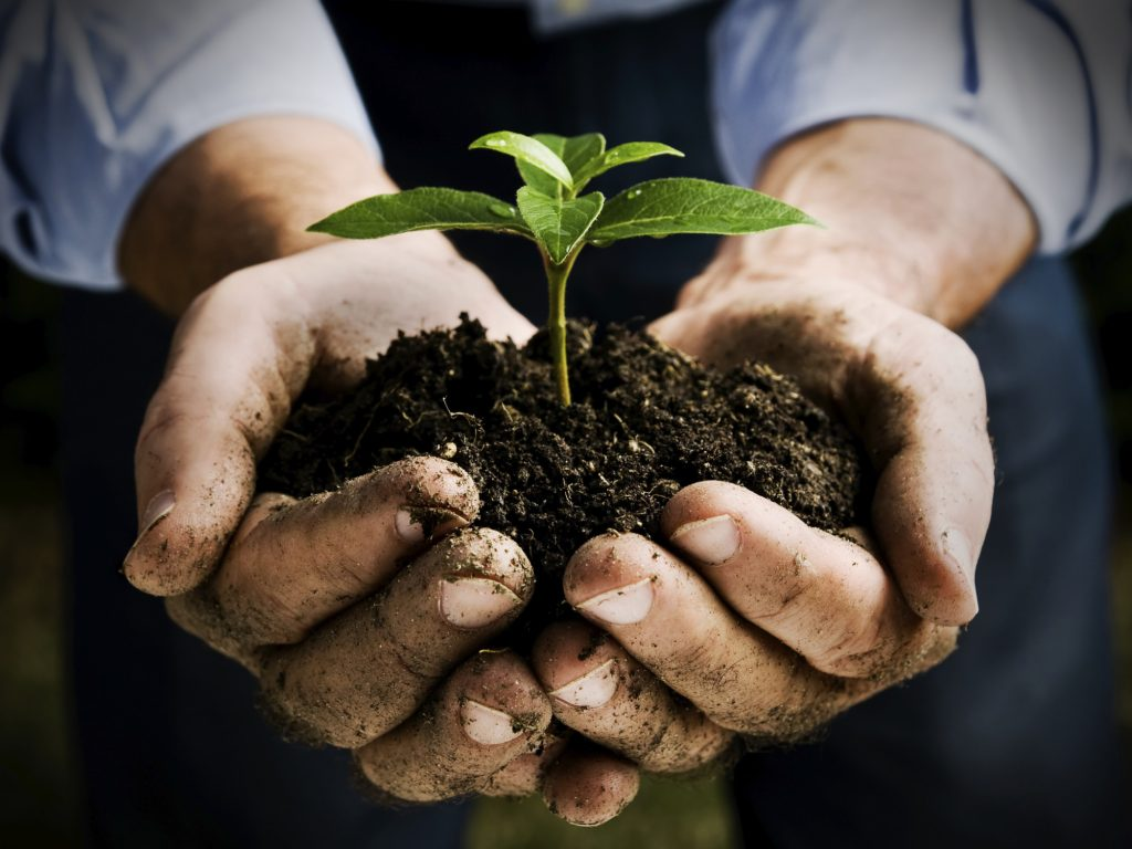 Farmer hand holding a fresh young plant. Symbol of new life and environmental conservation