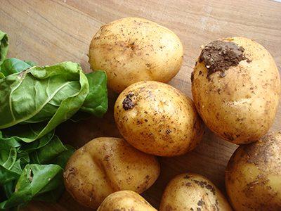 patate terra