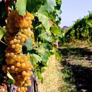 Agricoltura biodinamica: cosa è esattamente?