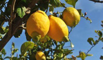 5 MOTIVI E MEZZO per bere acqua e limone al mattino