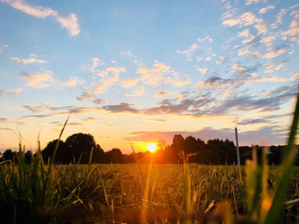 Il sole in un campo: forza cosmica centrale per l'agricoltura biodinamica