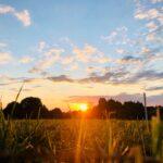 Agricoltura biodinamica: il ruolo delle forze cosmiche
