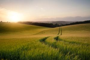 Agricoltura biodinamica: un approccio olistico